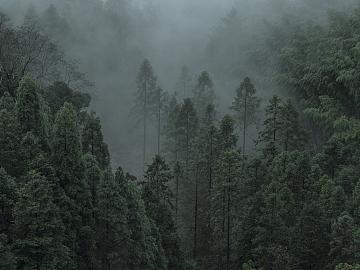 雾境(一)Foggy Mountain Tour