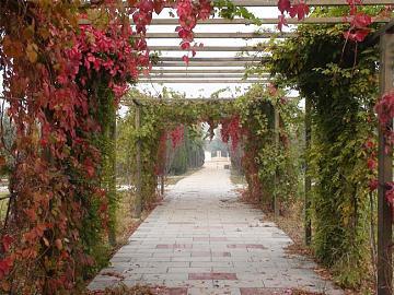 《致悼艾米丽的玫瑰》William Faulkner的短篇
