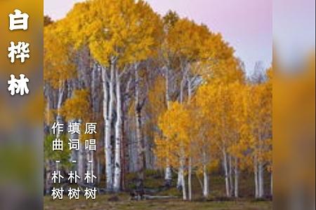 白桦林|好声音#14