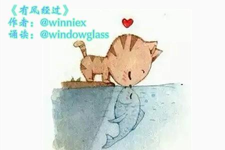 爱上鱼的猫——《有风经过》